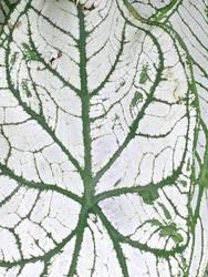 Yi Li Texture by puSIG3