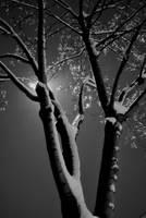 Snow on the Tree by coffeenoir