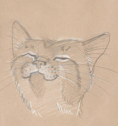 Happy Cat by Swashbookler