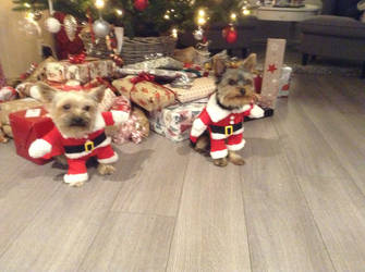 Theo and Dexter, the little Santas by schoolfilmer