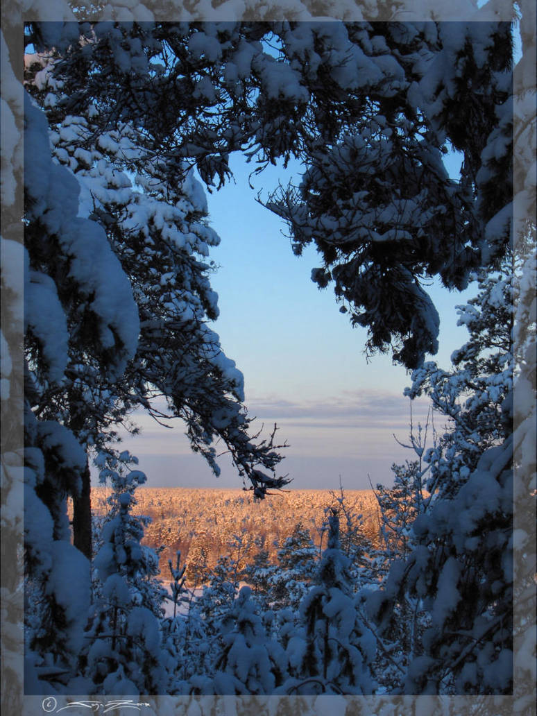 Glowing winterwoods by zorm