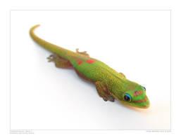 Madagascar Day Gecko II by SpicyHamster