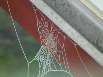 Frozen Spiderweb by MartiniPols
