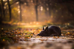 One Last Autumn Dream by BlackPepperPhotos