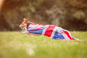 THE BRITS ARE COMING by BlackPepperPhotos