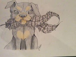 Its so fluffy, Im gonna die!! by jjanina