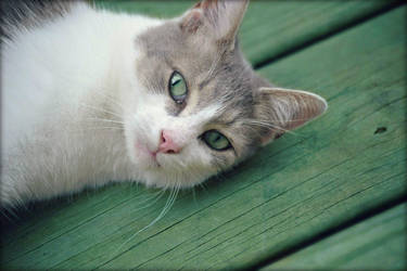 Hello My Friend by suezn