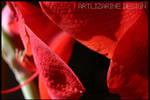 really red ? ::02:: by Artlizarine