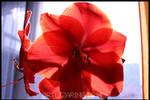 really red ? ::03:: by Artlizarine