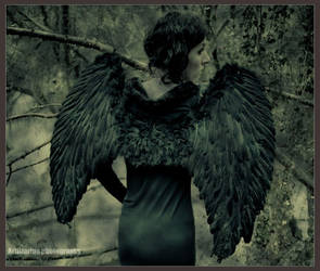 :: Winter's Wings :: 04 by Artlizarine