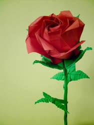 color rose by flashbakart