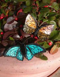 Butterflies (11 and 12) by Lluhnij