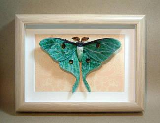 Actias luna (luna moth) by Lluhnij