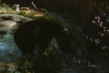 Bear (2 of 1) by Thepieholephotograph