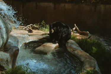 Bear (8 of 1) by Thepieholephotograph