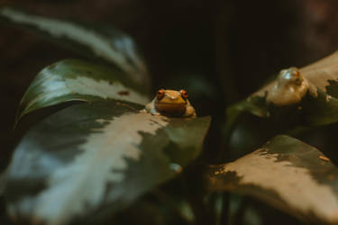 Frog (2 of 1) by Thepieholephotograph