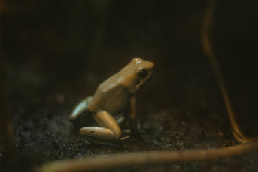 Frog (4 of 1) by Thepieholephotograph