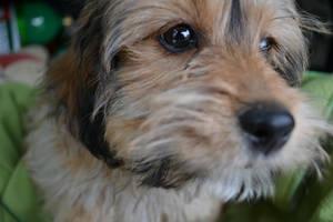 Puppy! by EddieMW