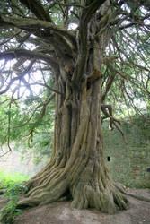 Wisdom Tree by Kelvish