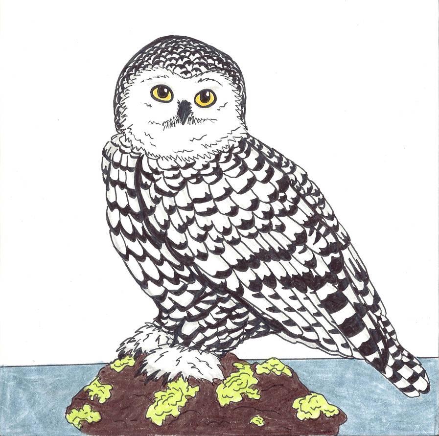 Snowy Owl by KieliIndustries