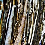 recycle... by iangrahamimages