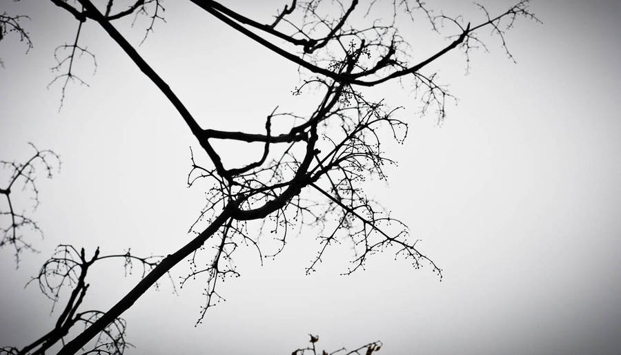 Overcast in LA by aElien