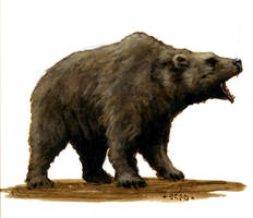 bear by Nordheimer