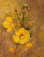 Yellow Flowers by tadamson