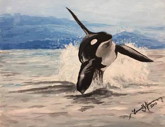 Orca by tadamson