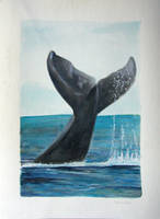 Whale Tail by tadamson