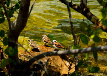 3 Birds on Old Tampa Bay by matt30fl