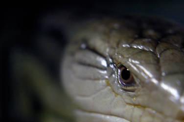 Irian lizard by y-liang