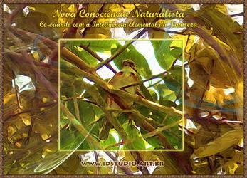 New Naturalist Awareness by Rajabally