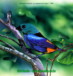 7 colored Tanager by Rajabally
