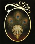 Peacock by grelin-machin