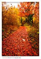 Autumn Road_3 by Marcello-Paoli