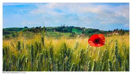 Near San Gimignano by Marcello-Paoli