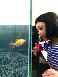 ImageAs Kiku and fish by amalia51