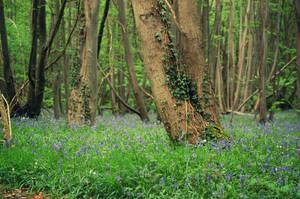 Les printemps by Morgan-Timblene