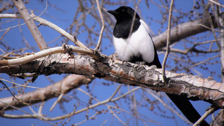 one for sorrow by Nullibicity