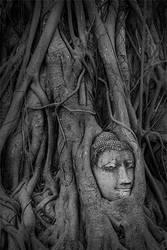Wat Mahatat Bhudda Head by Jonson-Art