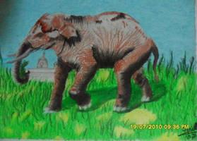 Elephant by Ezequielmercado
