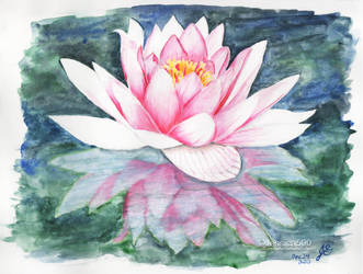 Water Lily by Jessica500