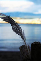 Feather in the Wind by kellyanne000