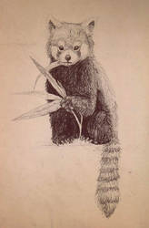 Traditional Red Panda by gothic180