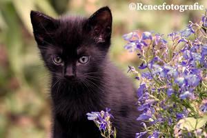 Adorable kitty by lifaya