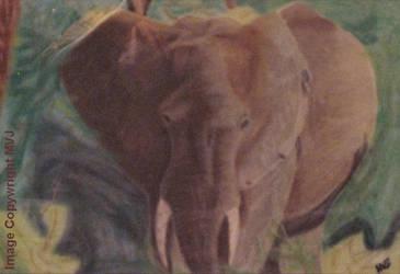Elephant by Kheprera