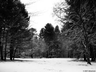 Snowy clearing by k8marieuk