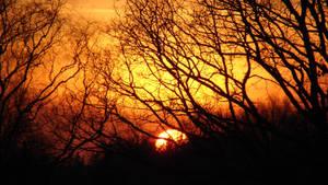 Amberfull Sunshine by Lunshines