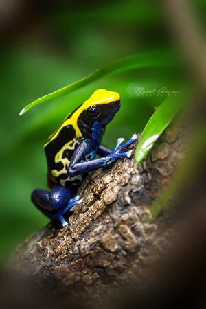 Poison Dart Frog by MGreinerArt